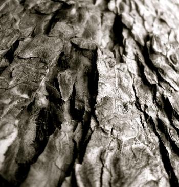 Bark_detail